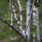 Luontainen visa Salmelan metsästä